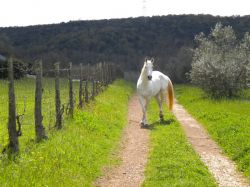 Farmstay and holiday with horses in Maremma Tuscany