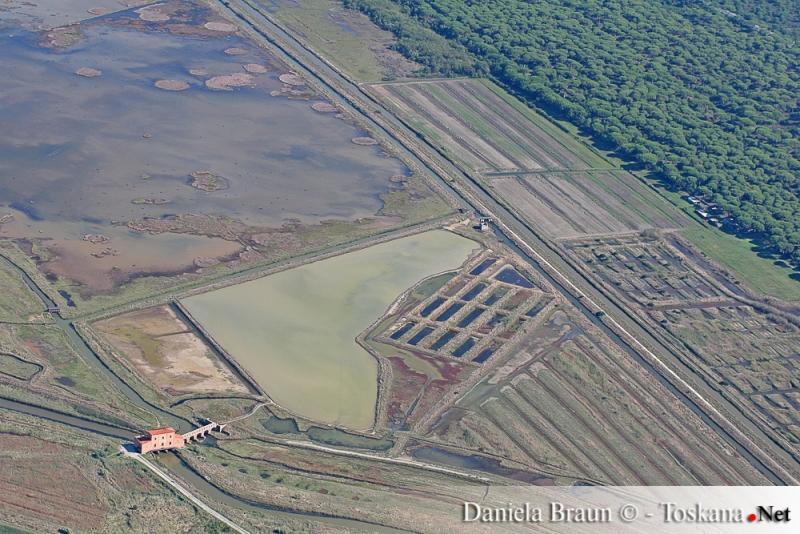Marshy area Castiglione della Pescaia Grosseto Maremma