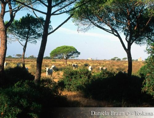 Grosseto and the Maremma Tuscany