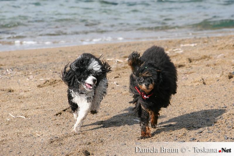 vacanze con il cane in Toscana