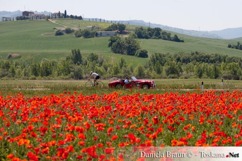 Mille Miglia - gara automobilistica di macchine d'epoca - campo di papaveri Val d'Orcia Toscana