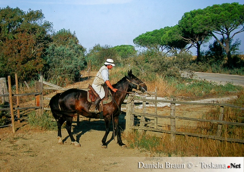 Der Buttero, maremmanischer Cowboy bei der Arbeit