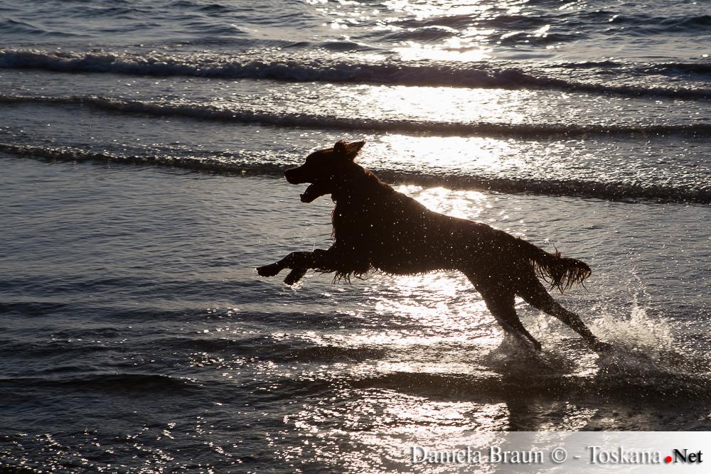 Punta Ala Bau Beach Hundestrand Punta Ala Maremma