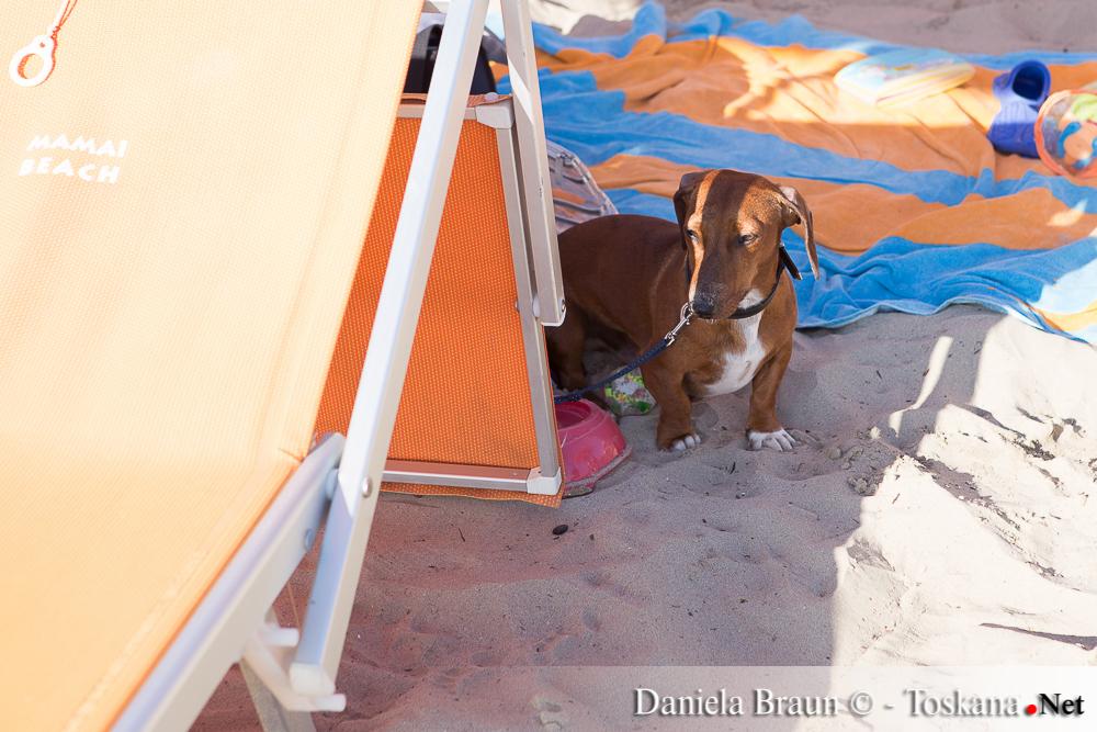 Hundestrand Scarlino - Mamai Dog Beach - Toskana Toscana Tuscany