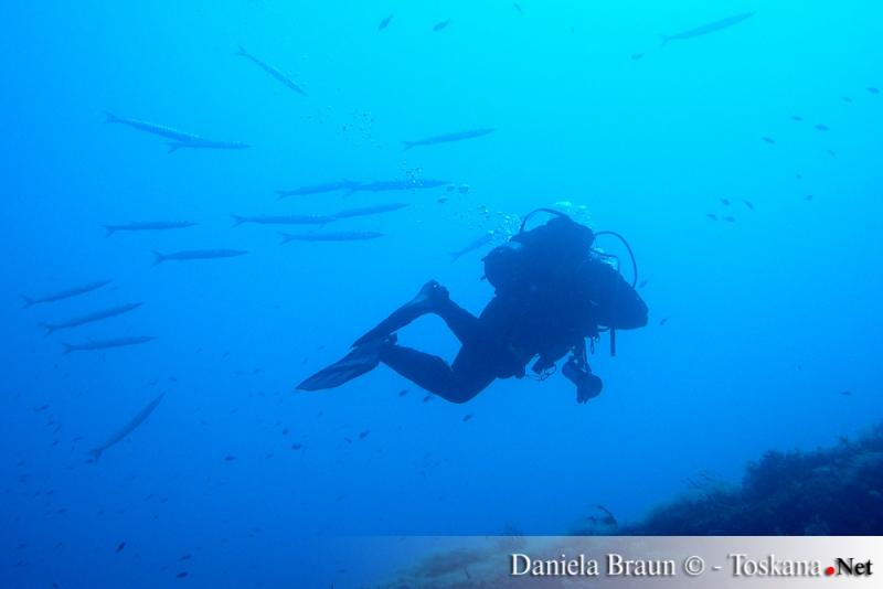 Taucher im Meer des toskanischen Archipel