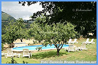 Il Ciliegio - Swimming pool lying between olive trees